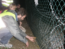 liberazione animali