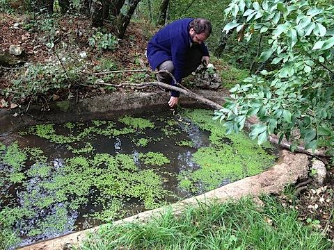 Stagni tutori stagni e zone umide del friuli venezia giulia for Vasca per stagno